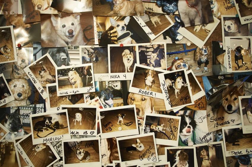 Eine Polaroidkamera ist etwas für Sammler und Liebhaber von Polaroids.